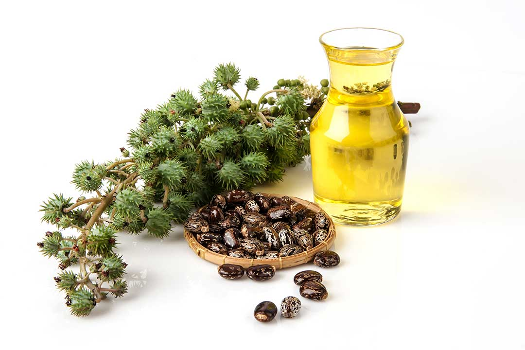 Benefits and Uses of Castor Oil